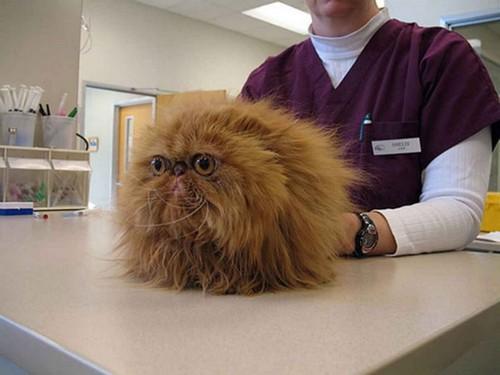У кошки кал с кровью: что это значит, почему появился, что 16