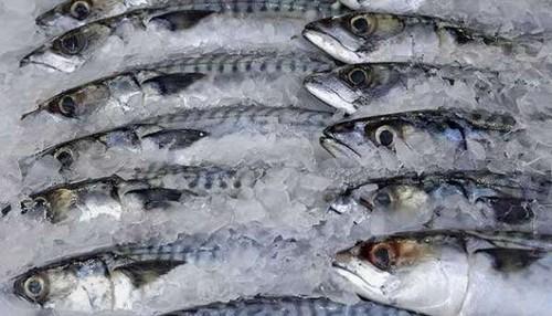 Правильная обработка рыбной продукции