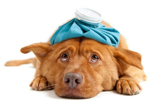 Можно ли давать собаке от глистов пирантел
