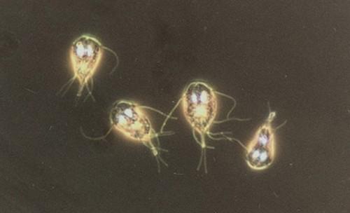 мумие от паразитов