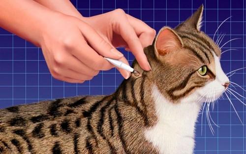 обработка кошки
