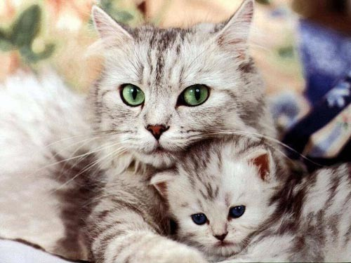 препараты для кошки от глистов