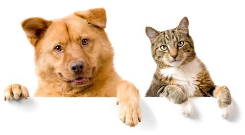 применение ивермека для кошек и собак