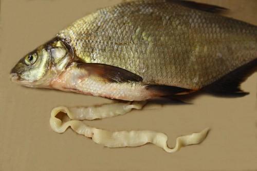 рыбонька